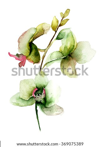 Stylized Orchids flowers, watercolor illustration