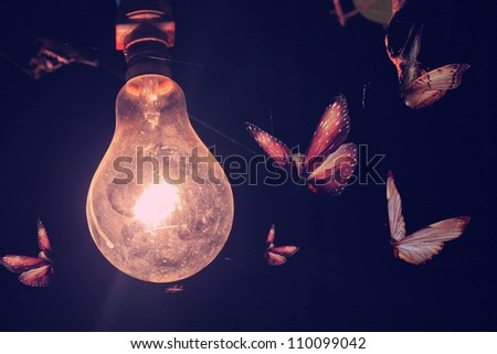Stylized photo bulb and butterflies flying on light