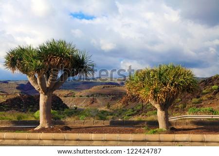 Sub tropical trees against arid landscape