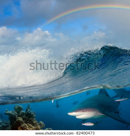 submerged image seaview with ocean breaking rough wave and rainbow above it and underwater part with coral reef and dangerous predator bullshark