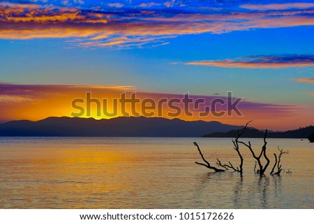 Submerged tree in still surf at dawn, with island and rising sun in background - Bushland Beach, Townsville, North Queensland Australia #1015172626