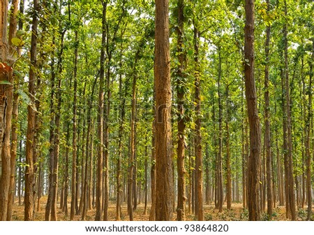 subtropical forest of india