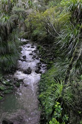 Subtropical waterfall in Kauri forest in Northland, New Zealand