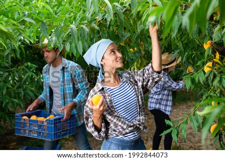 Successful female gardener with ripe peaches in orchard on sunny day