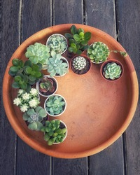 Succulent Cactus Preparing : Cactus transplantation in a new pot with soil, drainage, pot on terracotta tray. Copy space.