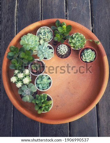 Succulent Cactus Preparing : Cactus transplantation in a new pot with soil, drainage, pot on terracotta tray. Copy space. Photo stock ©