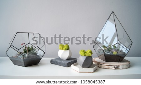 Succulent in a pot in the interior #1058045387