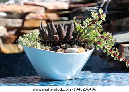 Succulent plant centerpiece container garden with pebbles on blue glass tile water feature and waterfall.