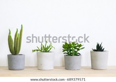 succulent plant in handmade concrete pot in room decoration for cactus lover - Shutterstock ID 689379571