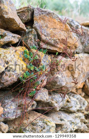 Succulent plant on rocks in the Provence, France