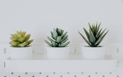 succulent plants and cactus in a flowerpots on a white table