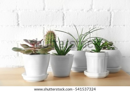 Succulents and cactus on wooden table on white brick wall background, close up - Shutterstock ID 541537324