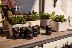Succulents and trinkets in homeware shop. A close up view of small eco-friendly succulent plants in white ceramic pots and small wooden shops in a decorative home wares store