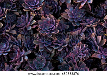 Succulents at Night