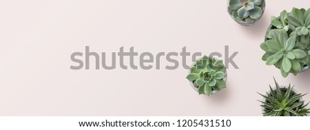succulents banner or header with different plants on a soft blush / pink background, flat lay / top view, copyspace for your text