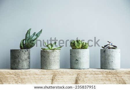 Succulents in diy concrete pot. Scandinavian room interior decoration #235837951