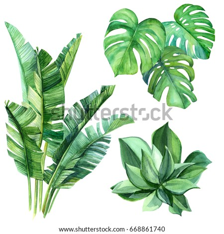Succulents, monstera, Palm leaves and other. Perfect for any designs, t-shirts, phone cases, bags, and other.Floral clip-art. - Shutterstock ID 668861740