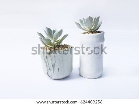 Succulents on white wall background, decorate home #624409256