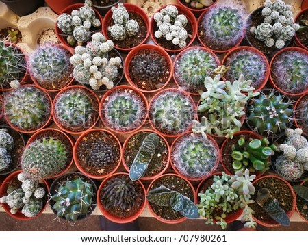 succulents or cactus in concrete pots. tray garden