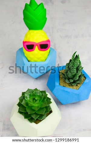 succulents potted in concrete pots and funny pineapple in glasses  #1299186991