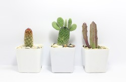 Succulents. Potted small house plants, home interior. White minimal cactus in a jar.