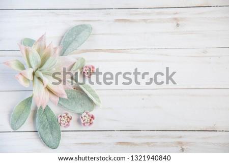 Succulents Styled Stock photo. Lifestyle background. Boho blogger banner. feminine mockup scene. Greenery succulent scene. Wedding invitation mock up. Rustic styled photo. Floral blog space.