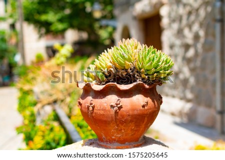 Suculent plants in rustical style pot, Mallorca