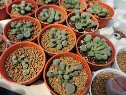 Suculents Plants,a little baby suculent in a pot.selective focus