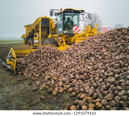 Sugar beet harvest with a Sugarbeet harvester an agricultural machine