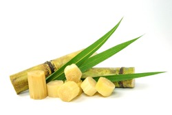 sugar cane and brown sugar on white isolate background