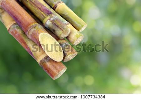 Sugar cane, Cane, Sugarcane piece fresh, sugar cane on green nature bokeh background, Sugarcane agriculture #1007734384