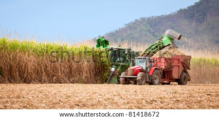 Sugar cane harvest in tropical Queensland, Australia