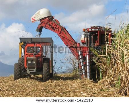 Sugar cane harvesting in Mauritius