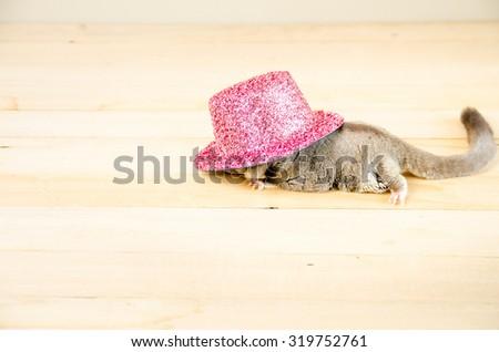 Sugar Glider in pink pink metallic party hat.