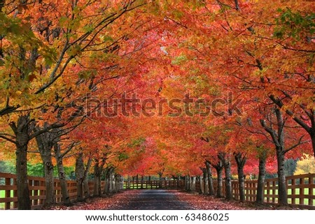 stock-photo-sugar-maples-showing-off-their-autumn-colors-63486025.jpg