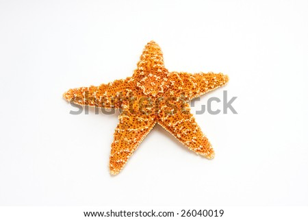 Sugar Starfish - Top view - isolated on white