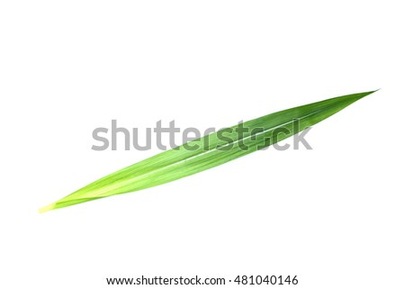 sugarcane leaf on isolated white background #481040146