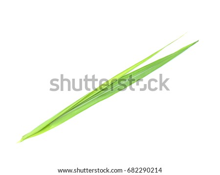 sugarcane leaf on isolated white background #682290214