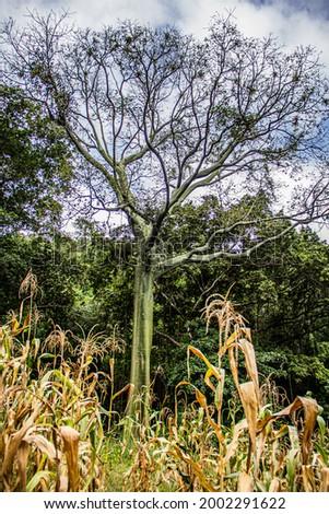 sumergido en la naturaleza peruana  Foto stock ©