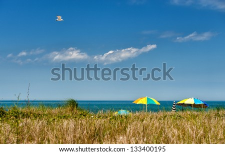 Summer at Martha 's Vineyard - Seagull soaring over a beach at Martha's Vineyard on a sunny day