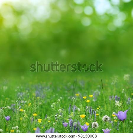 summer background - Shutterstock ID 98130008