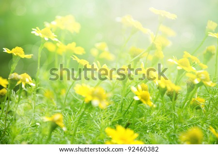 summer background, bright blur