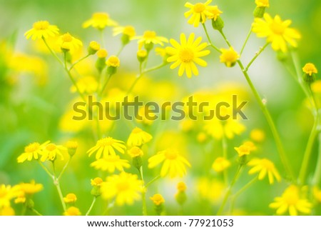 Summer Background. Flowers. Spring Background. Nature Background.