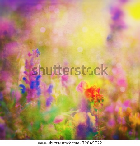 Summer Background. Flowers. Spring Background. Nature Background. Meadow