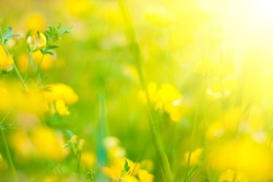 Summer Background. Flowers. Spring Background. Nature Background. Yellow Flowers