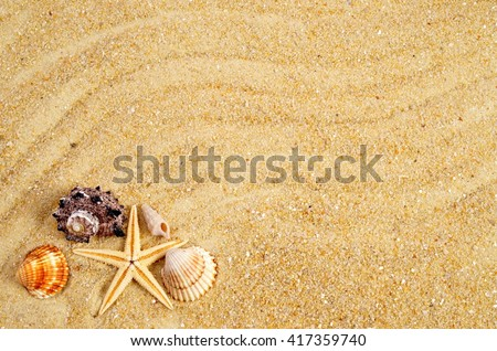 Summer background. Holiday season. Marine life. Card with sand and shells, copy space. Time for holiday.