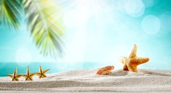 Summer background of free space for your decoration and shells on sand with green palms leaves. Sunny hot day on beach.