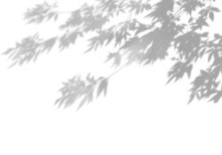 Summer background of shadows of leaf branches on a white wall. Blurry black-and-white image to overlay on a photo or mockup