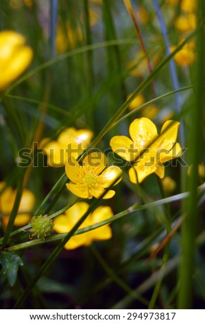 Summer background of yellow flowers