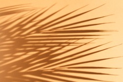 Summer background. Palm leaves and their shadow on an orange background. Summer concept. Summertime.